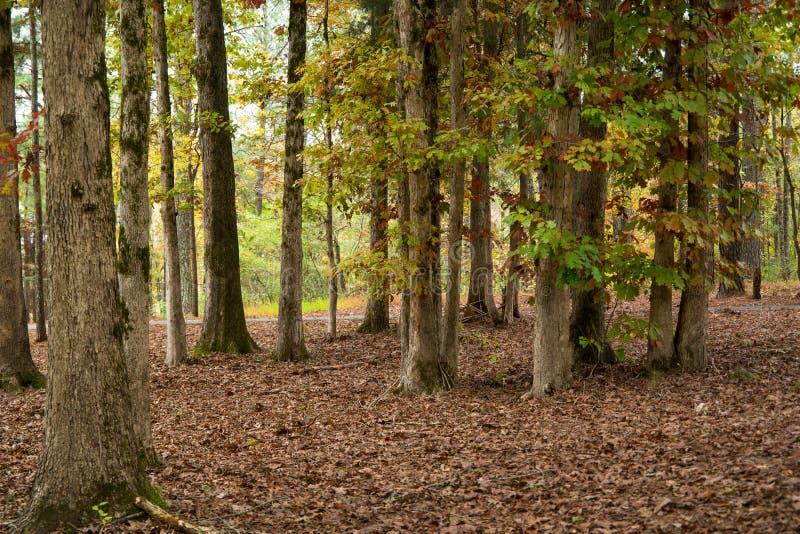 autumn kolor lasu obrazy royalty free