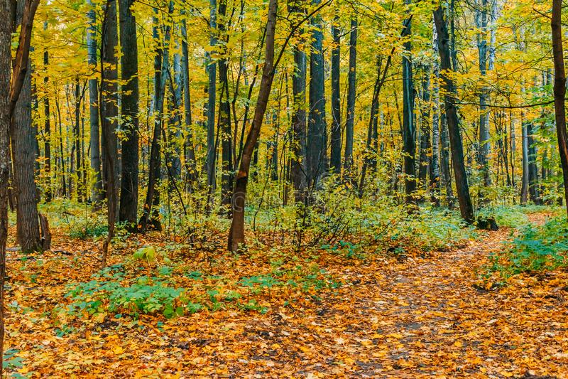 autumn kolorowe krajobrazu zdjęcie royalty free
