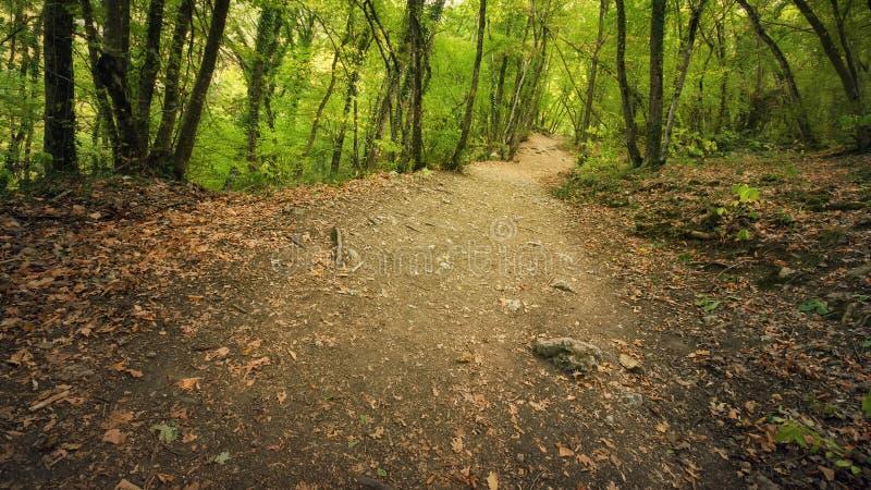 Autumn Into la voie de forêt dans la forêt photos stock