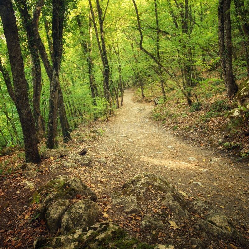 Autumn Into la voie de forêt dans la forêt photo stock