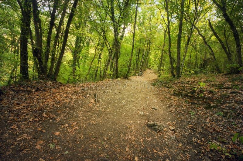 Autumn Into la voie de forêt dans la forêt photographie stock libre de droits