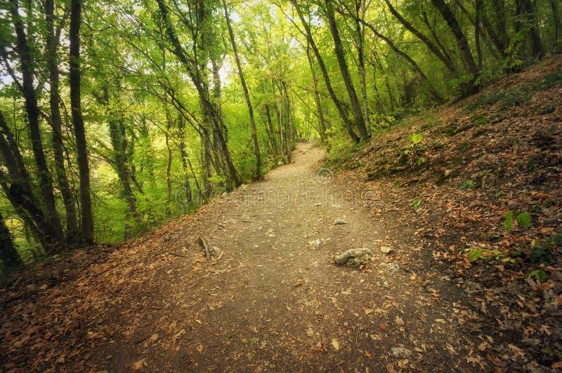 Autumn Into la voie de forêt dans la forêt image libre de droits