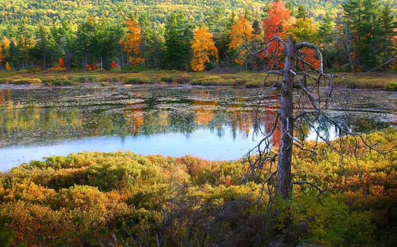Download Autumn Lake stock image. Image of october, orange, park - 2813563