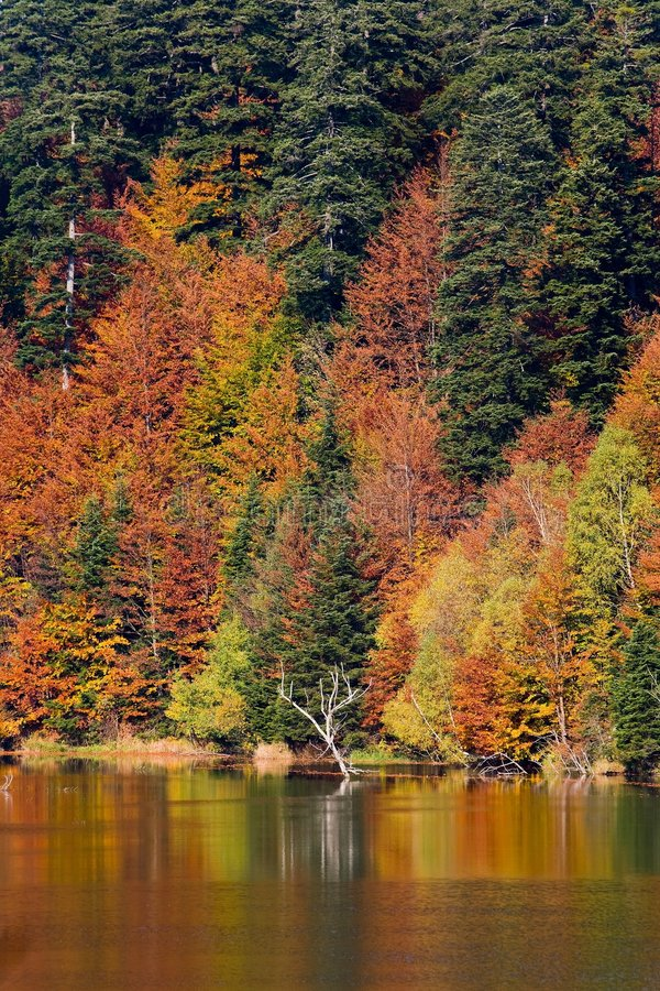 Download Autumn On Lake Stock Image - Image: 6870801