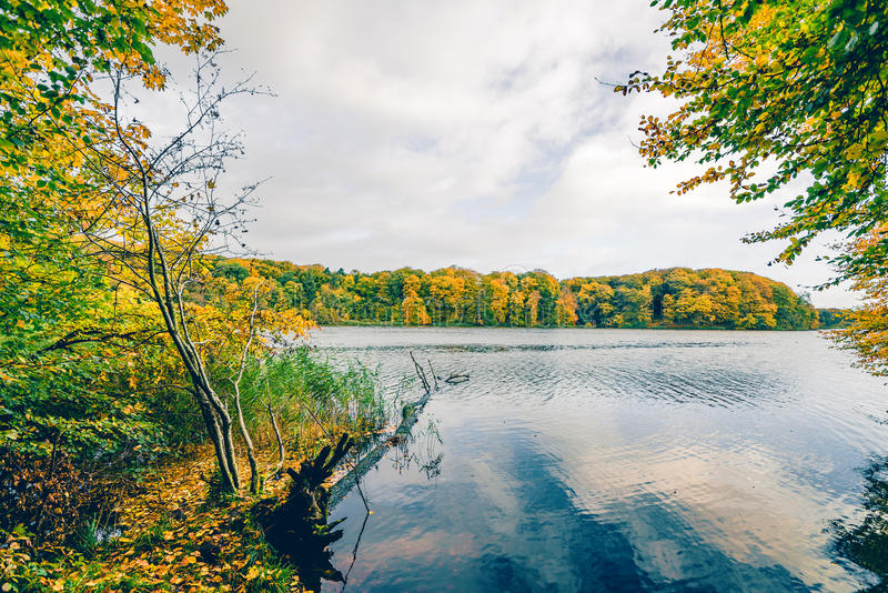 Autumn lake landscape with colorful trees. Aroud a large lake in autumn with a fallen tree in the water and trees in autumn colors royalty free stock photo