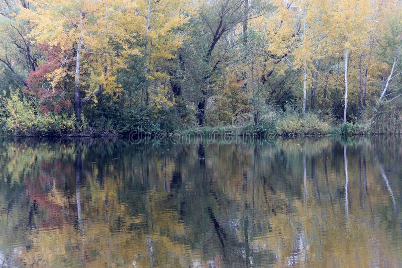 An autumn is in a lake. Reflection of the forest in a lake beautiful nature, autumn wild nature for text stock photo