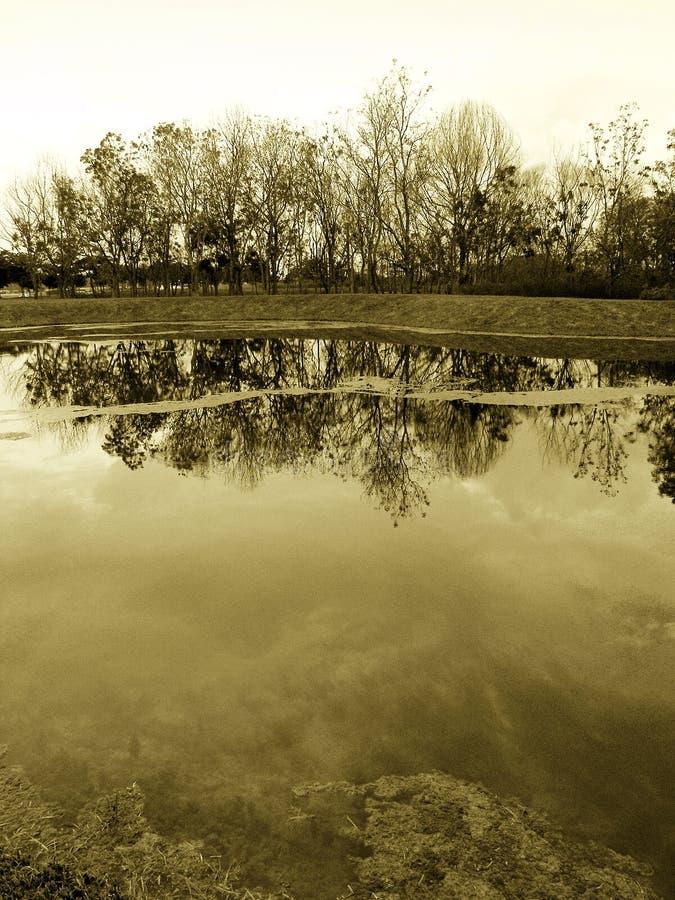 autumn lakeside krajobrazu sepiowi lasu. fotografia royalty free