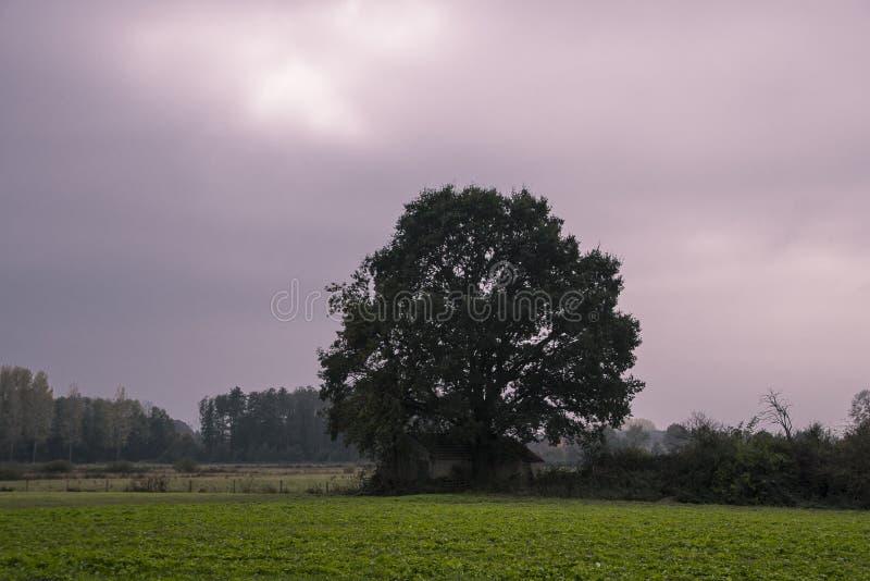 Autumn Landscape Árvore em um dia nebuloso imagem de stock royalty free