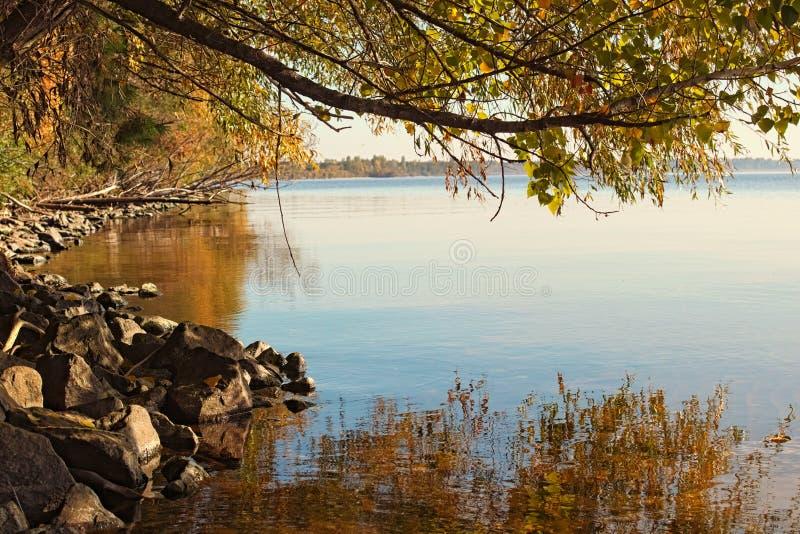Autumn Landscape Árvores com as folhas amarelas refletidas no rio de Dnieper perto da cidade de Kyiv, Ucrânia fotos de stock