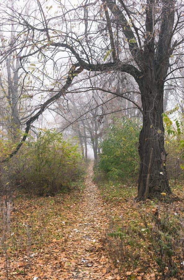Autumn Landscape Árvores no parque abandonado velho no tempo nevoento Um trajeto através do parque imagens de stock royalty free