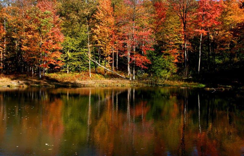 Download Autumn Landscape Royalty Free Stock Image - Image: 11343546