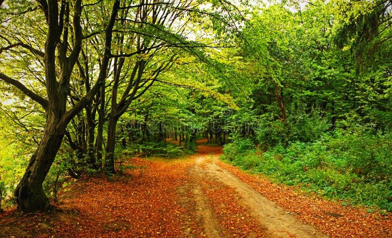 Download Autumn landscape stock image. Image of autumn, reflection - 11384073