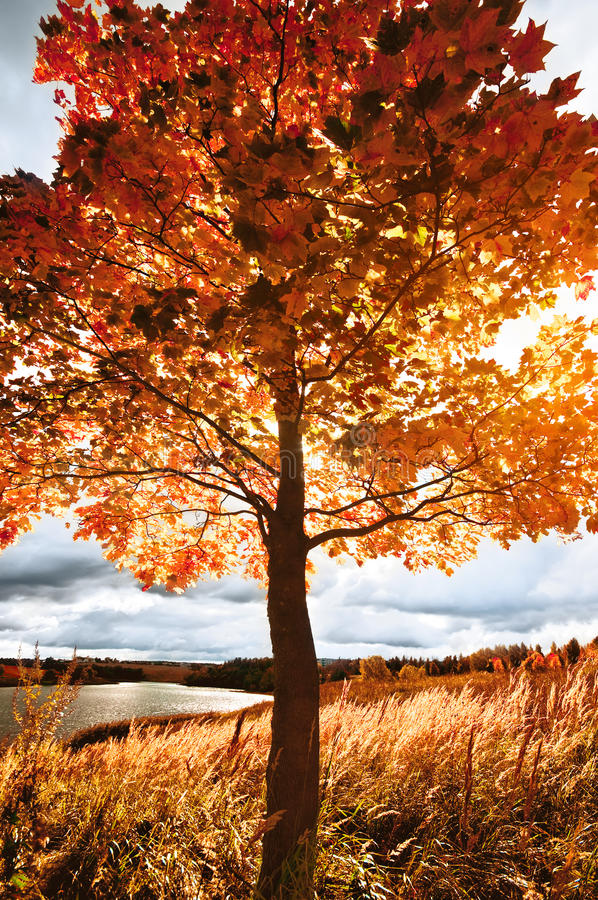 Autumn landscape royalty free stock images