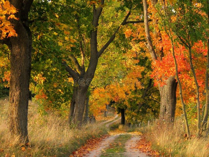 Download Autumn landscape stock photo. Image of canada, landscape - 1536616