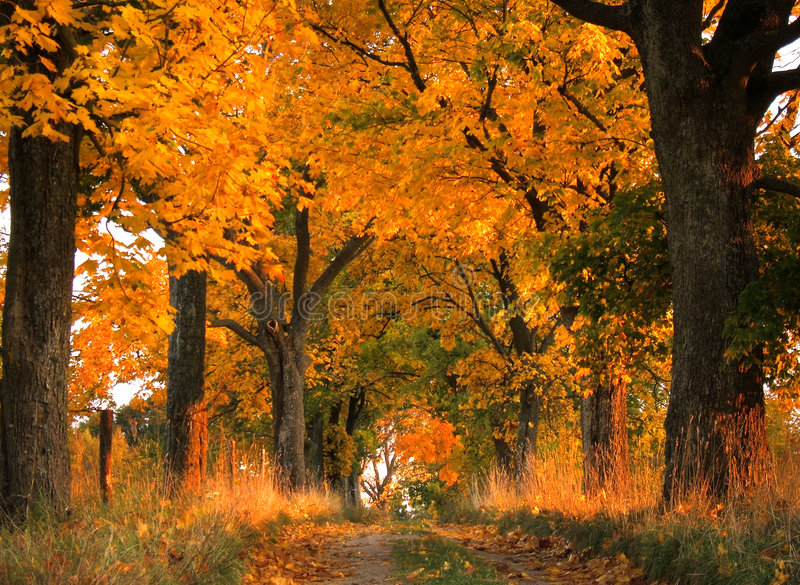 Download Autumn landscape stock image. Image of grow, north, leaf - 1536743