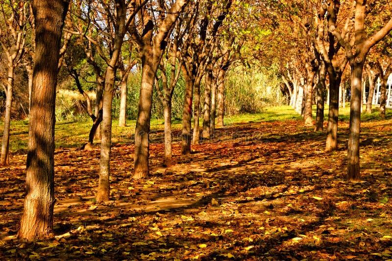 Autumn landscape stock image