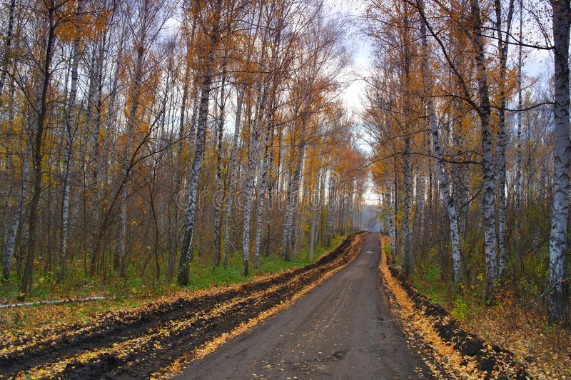 Download Autumn Landscape Royalty Free Stock Photo - Image: 28697495