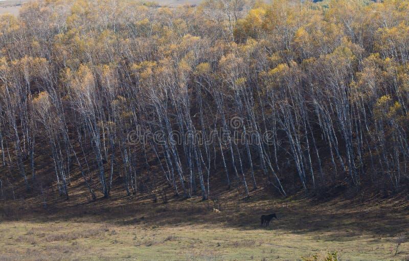 Autumn Landscape stockfotos