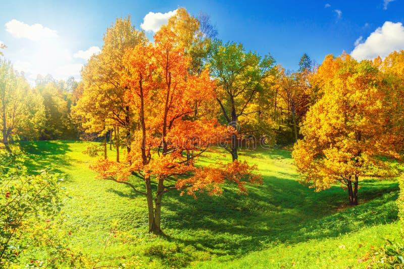 Download Autumn Landscape photo stock. Image du érable, beauté - 77163584