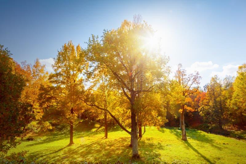 Download Autumn Landscape photo stock. Image du feuillage, érable - 77163594