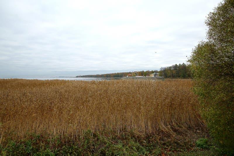 Autumn Landscape image stock
