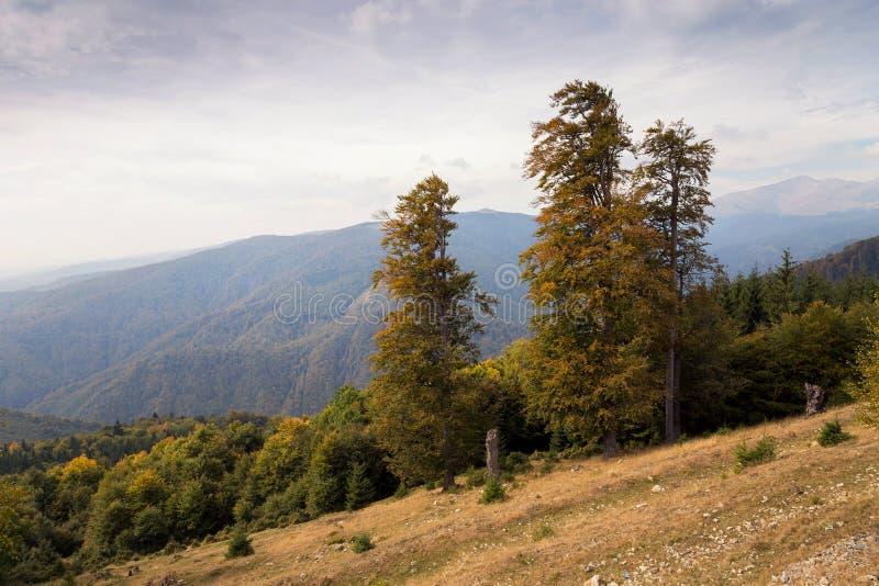 Autumn Landscape royalty-vrije stock afbeelding
