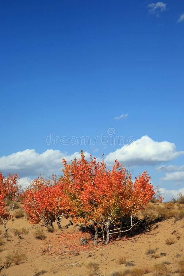 Download Autumn landscape stock photo. Image of forest, cloudy - 8583508