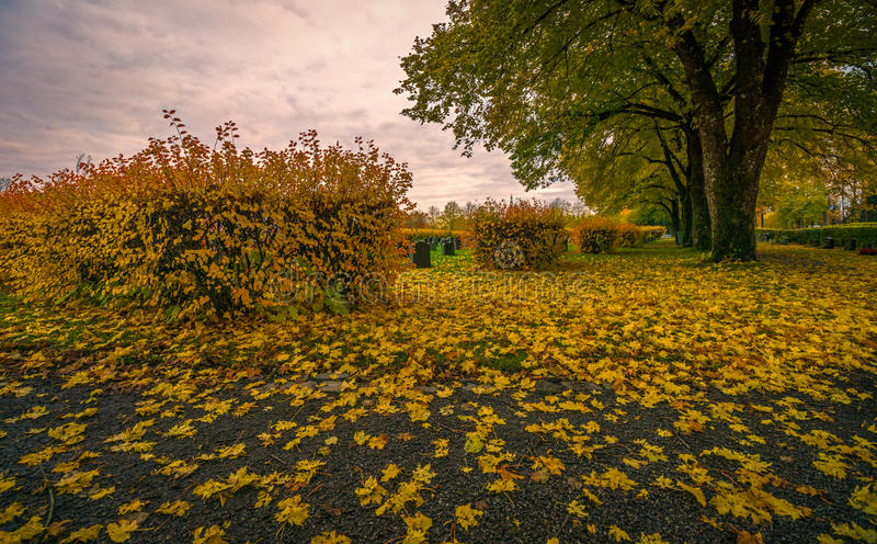 Autumn Landscape immagine stock
