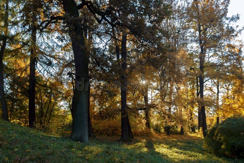 Autumn Landscape, imagens de stock