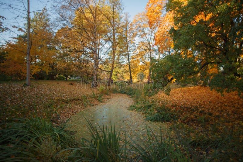 Autumn Landscape, foto de stock royalty free