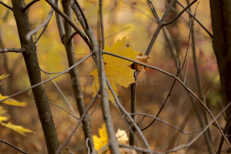Autumn Landscape Aleia ensolarado na floresta com as folhas amarelas em árvores imagens de stock royalty free