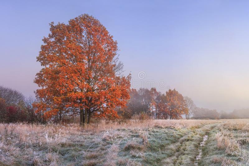 Autumn landscape. Amazing fall in november. Morning autumnal nature. Cold meadow with hoarfrost on grass and red foliage on trees stock photos