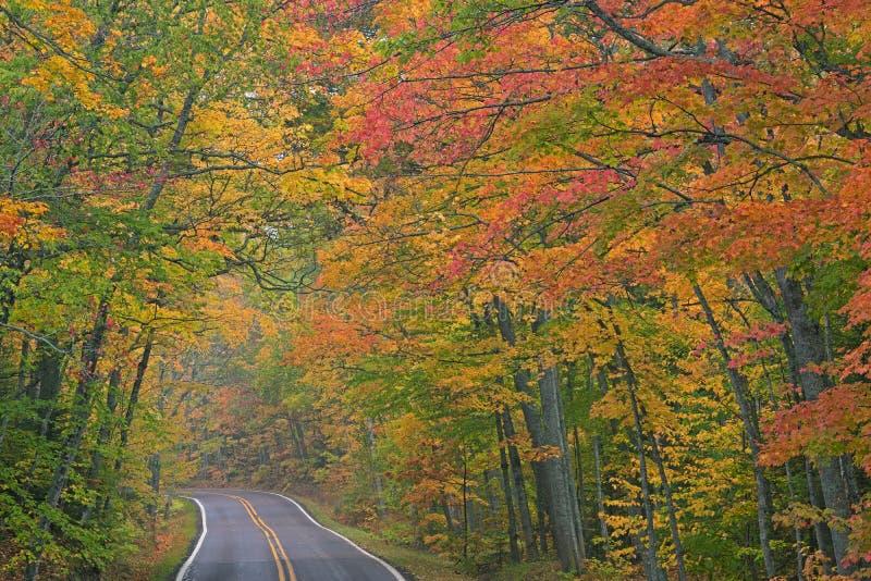 Autumn Landscape av huvudvägen som inramas av träd arkivbild