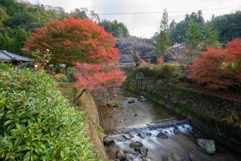 Autumn landscape background Red leave in Obara Nagoya Japan stock photography