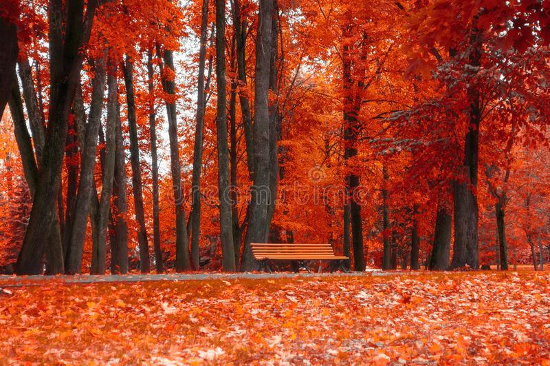 Autumn Landscape Bank unter den orange Herbstbäumen stockfotos