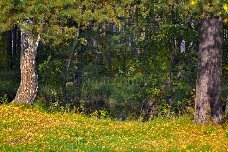 Autumn landscape on the banks of a forest river on a sunny warm day. royalty free stock photo