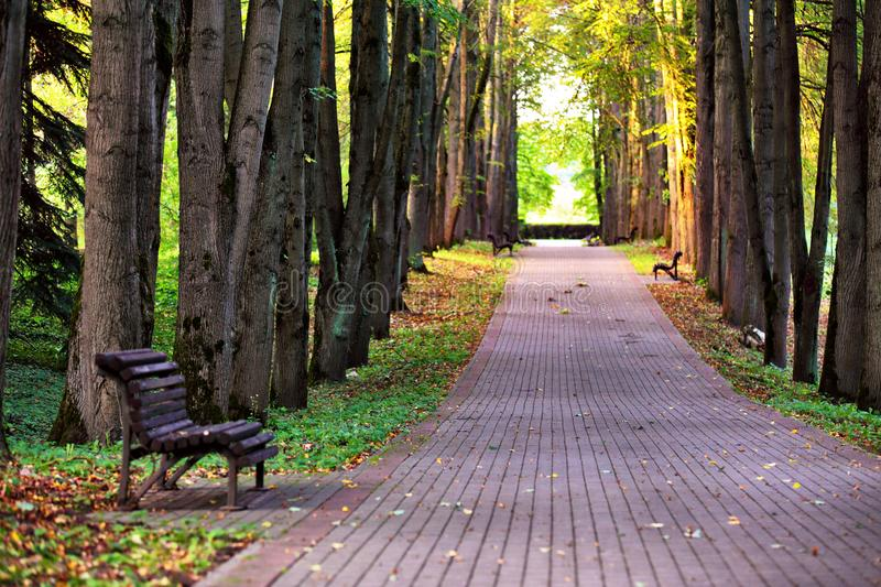 Autumn landscape - beautiful autumn pathway in park. Old high linden trees and benches on the park alley. Sunny autumn day royalty free stock photography