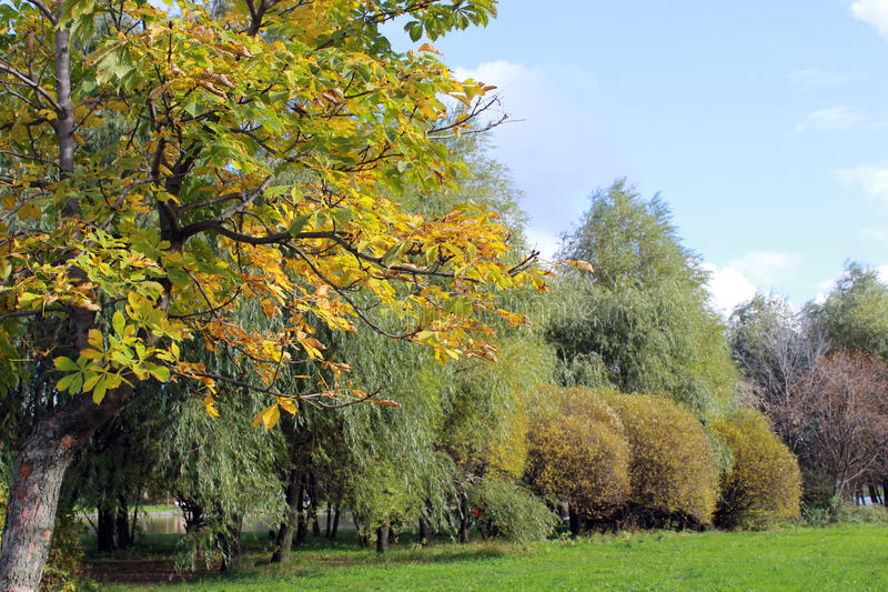 Download Autumn landscape stock photo. Image of yellow, city, clouds - 83706896
