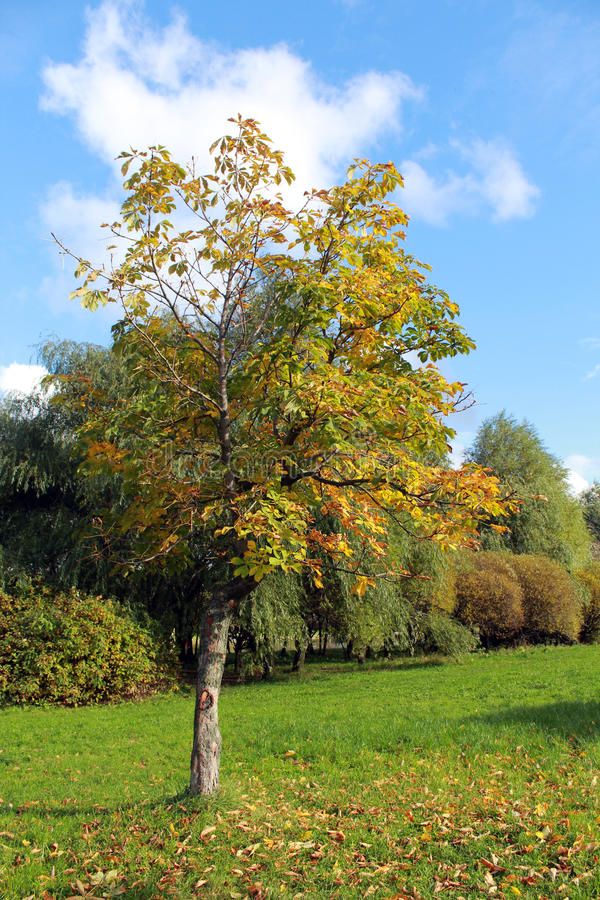 Download Autumn landscape stock image. Image of autumn, green - 83707721