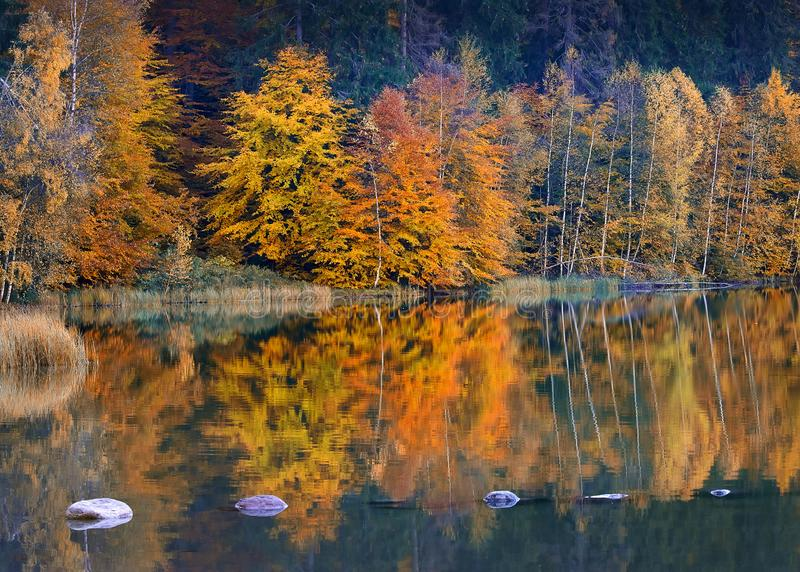 Beautiful autumn leaves and gorgeous landscape royalty free stock photo