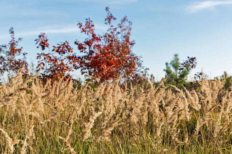 Autumn landscape from below in Central Ukraine stock images