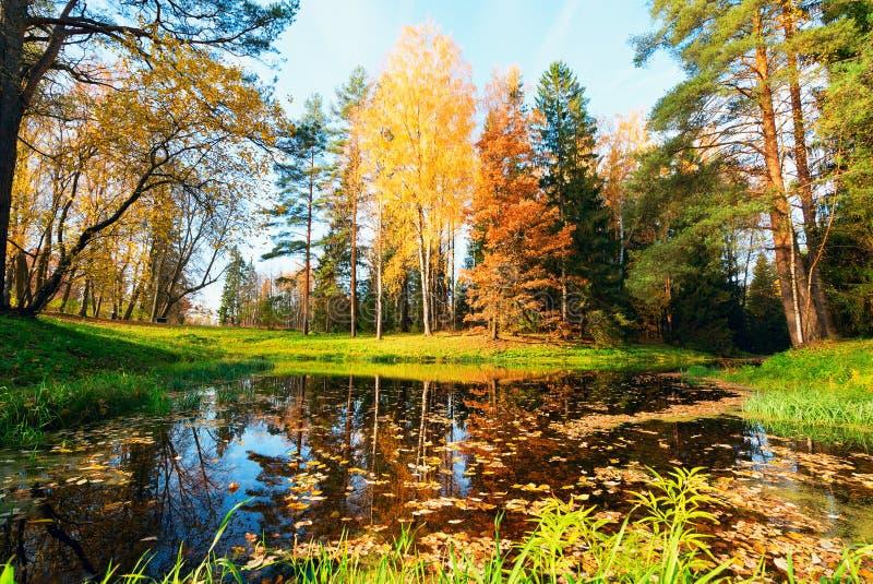 Autumn Landscape Betulla gialla sullo stagno fotografia stock libera da diritti