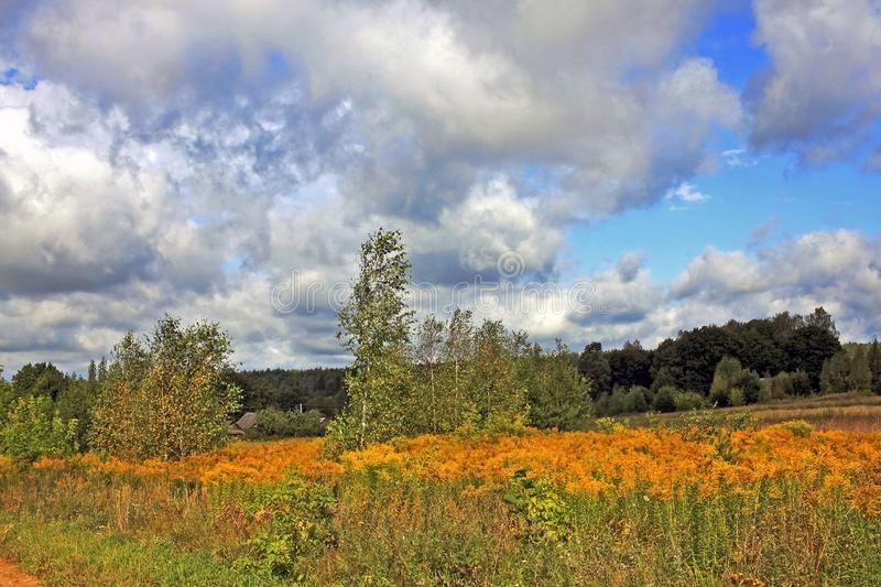 Autumn landscape with birches and cloudy sky. Autumn landscape with birches in the countryside on a cloudy August day royalty free stock image
