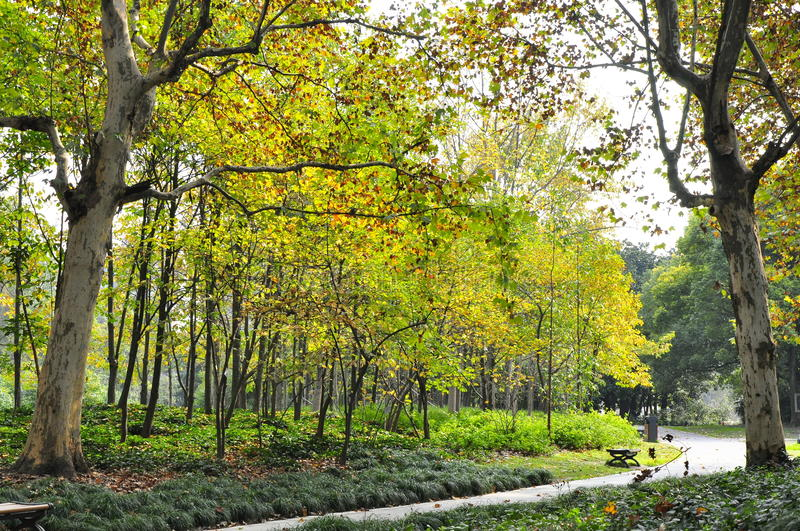 Autumn landscape in a botanical garden, Shanghai royalty free stock images