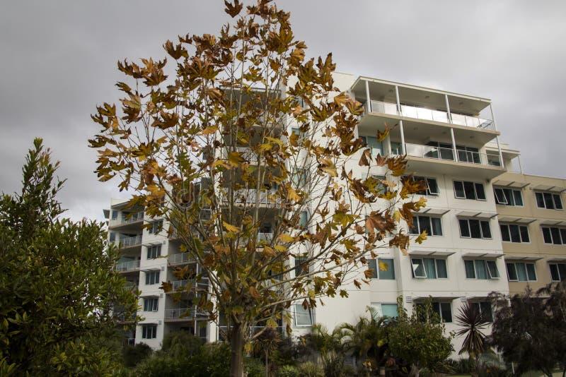 Autumn Landscape In A City Stock Photo