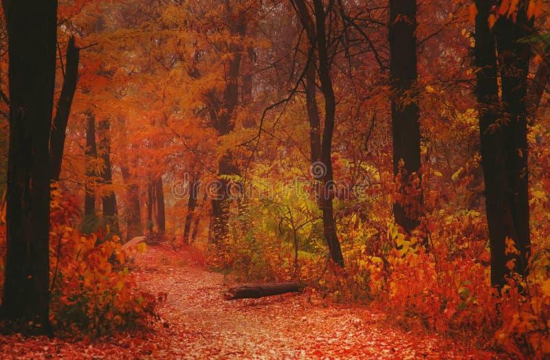 Autumn landscape, cloudy rainy foggy day in the park, selective focus royalty free stock photos