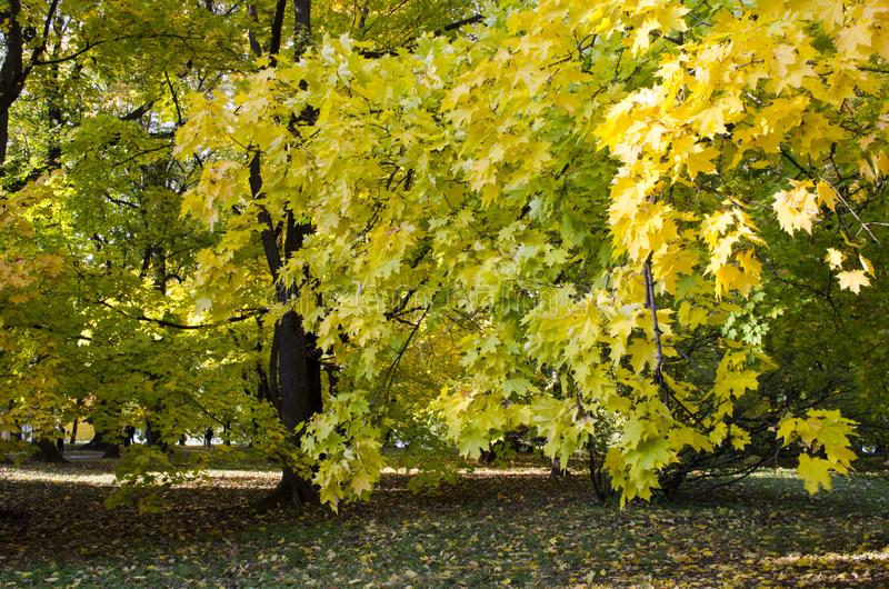 Autumn landscape with colorful trees in the park. View of autumn landscape with colorful trees in the park stock image