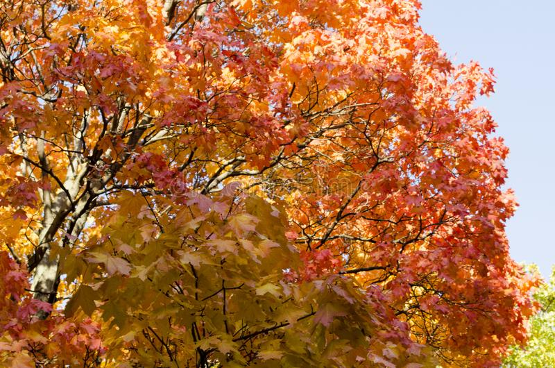Autumn landscape with colorful trees in the park. View of autumn landscape with colorful trees in the park royalty free stock images