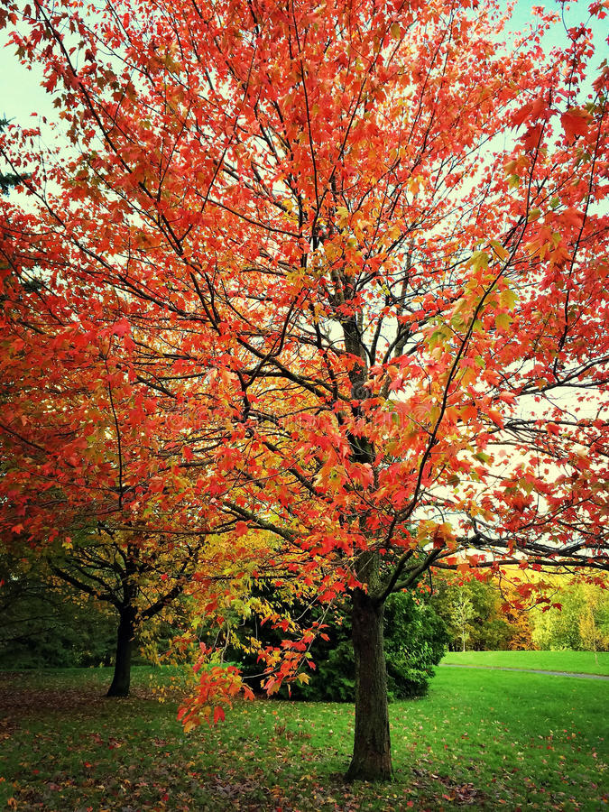 Autumn landscape with colorful trees. Quebec, Canada royalty free stock photo