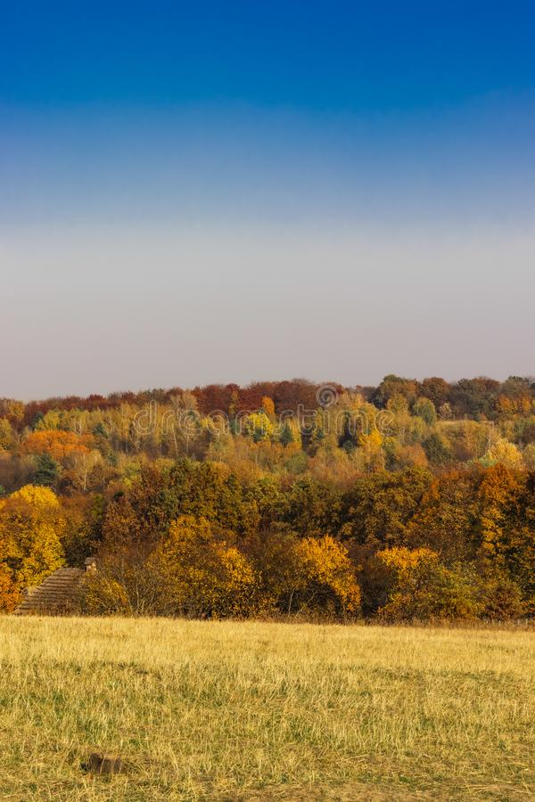 Autumn landscape with colorful trees and yellow meadow. Autumn colorful trees and yellow meadow stock photo